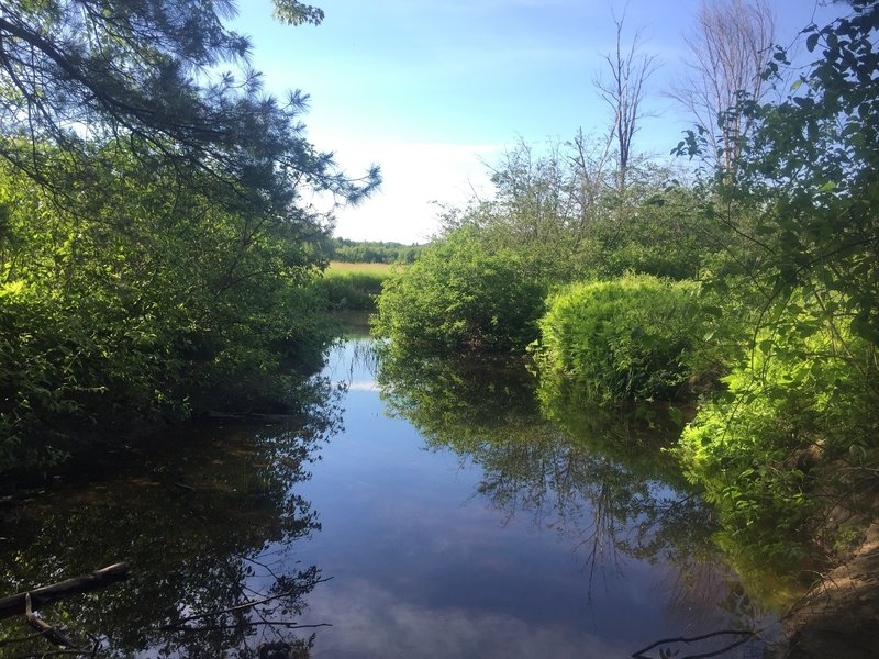 Great views of the brook on one of the side trails