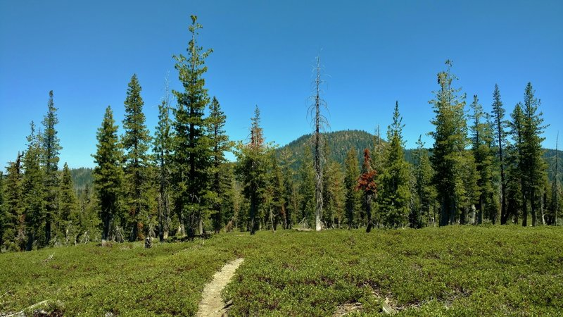 Hat mountain rises to the northeast, as Terrace, Shadow, and Cliff Lakes Trail travels through firs and manzanita ground cover.