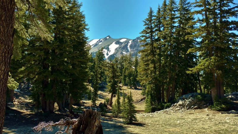 Lassen Peak is seen to the west-northwest, through the firs, high on Paradise Meadows Trail.