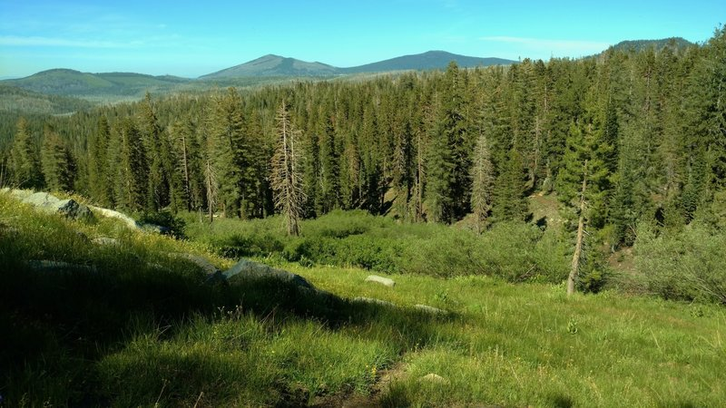The fir forest and meadows when looking northeast, high on Paradise Meadows Trail. In the far distance, left to right, are Badger Mountain, West Prospect Peak, Prospect Peak and Hat Mountain.