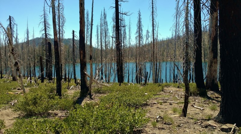 Feather Lake is a jewel in the fire blackened forest. The Reading Wildfire swept through here in 2012.