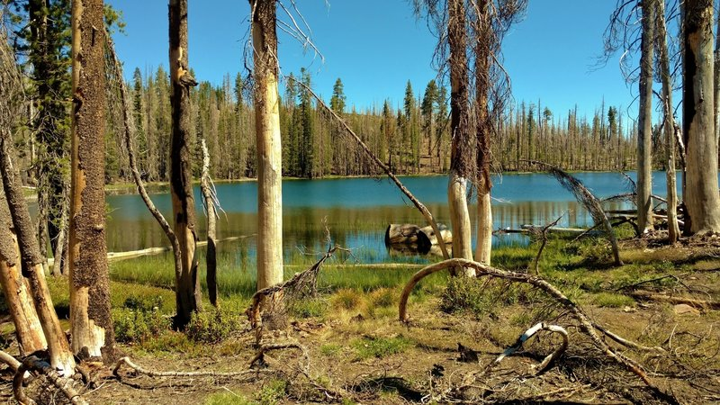 Big Bear Lake with green grass and some firs returning life to this fire ravaged landscape. The Reading Wildfire swept through here in 2012.