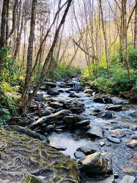 Beautiful stream near the beginning of the trail.