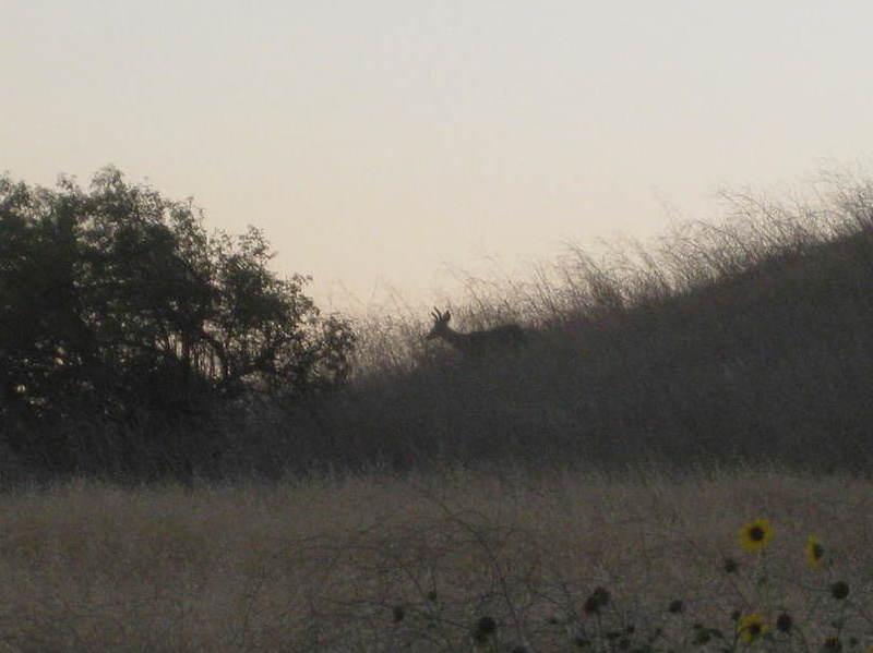 Deer.  (Another is hidden.)