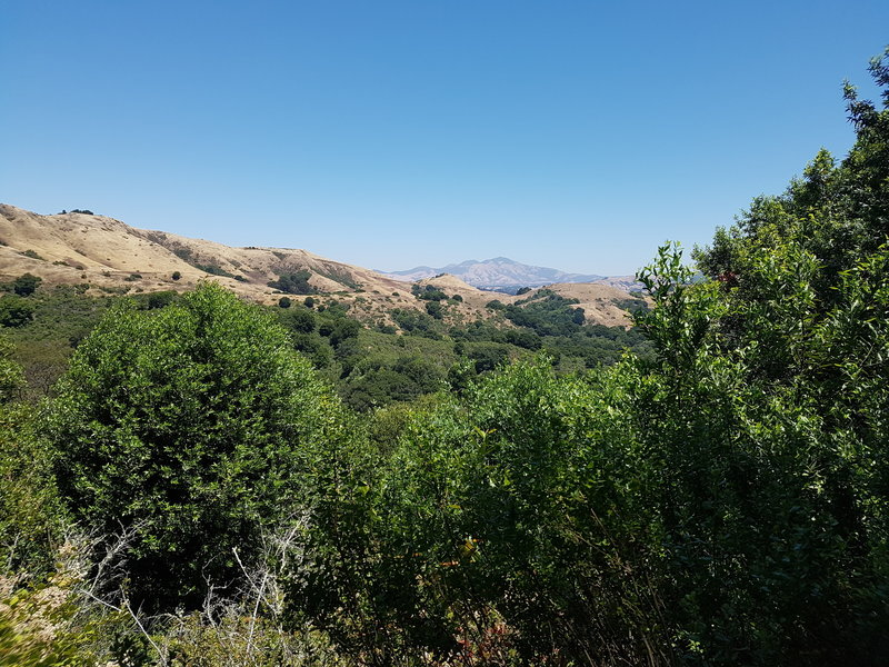 View of Mt. Diablo in the distance