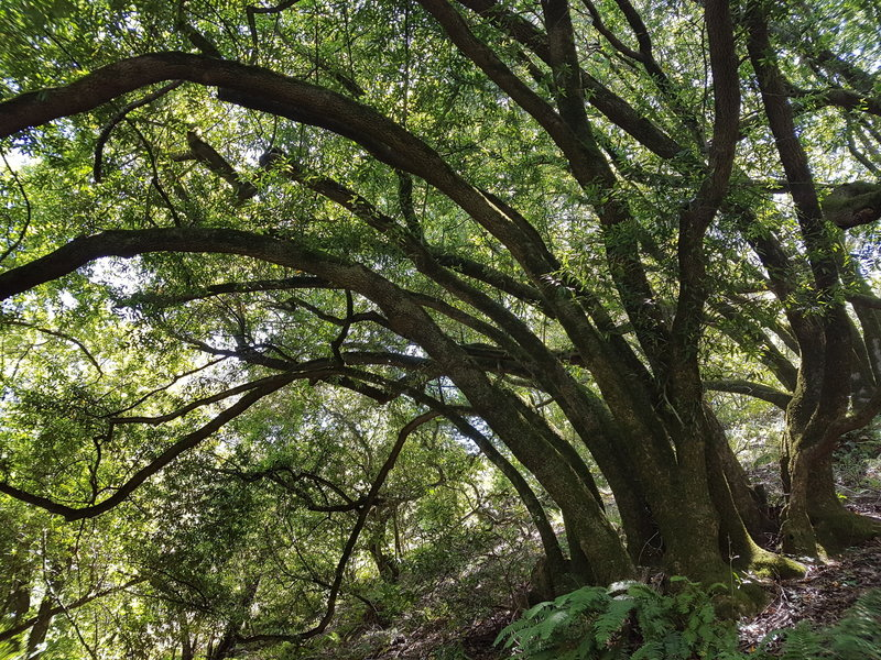 Bay Trees provide needed shade on a hot summer day