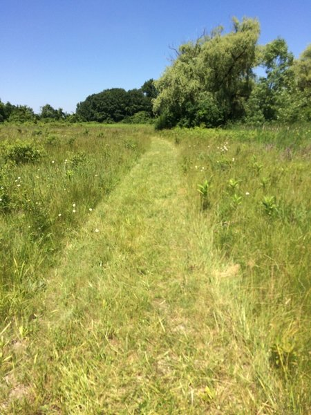 The pathway on the Prairie Trail