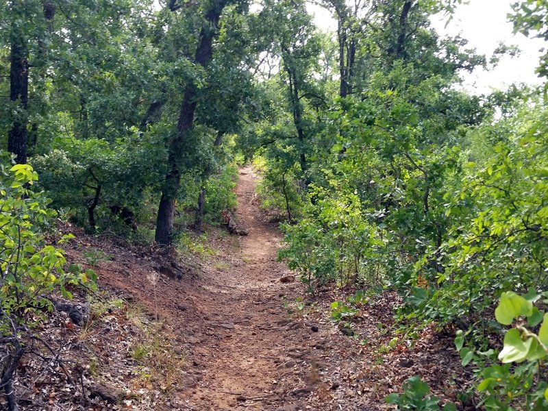 Part of the Main Pond Trail goes through oak forest