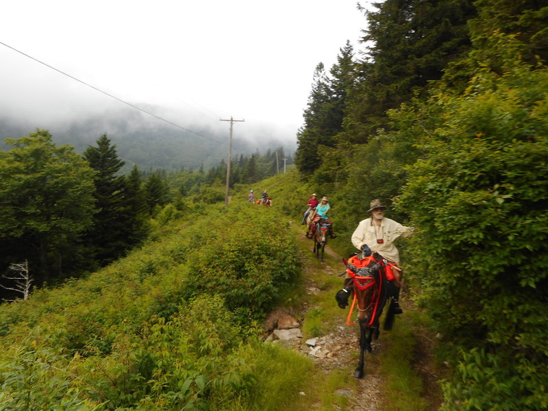 Riding the BHT up near the Mt Mitchell intersection