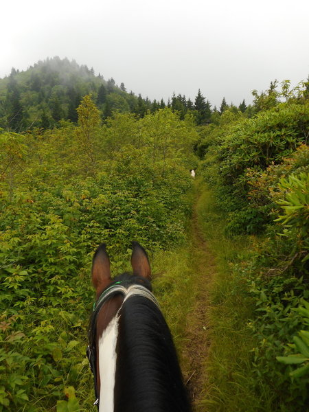 enjoying the trail on BHT