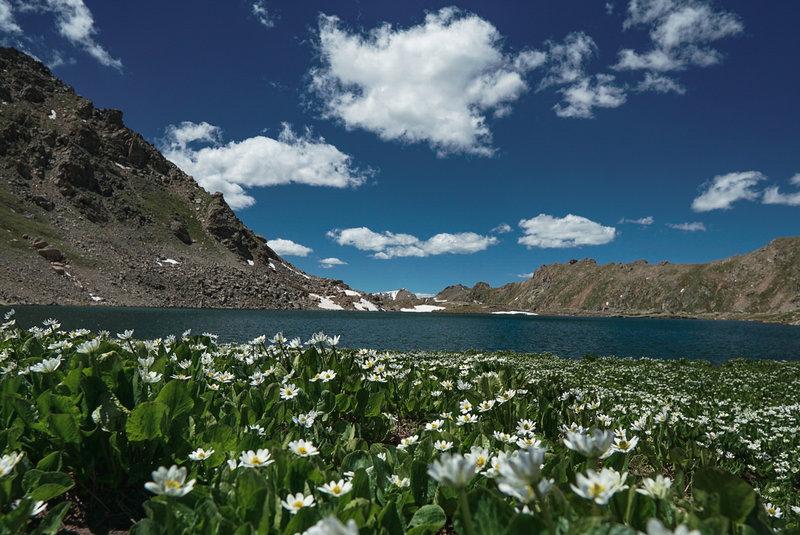 Seasonal flowers (Marsh Marigolds) surround Lost Man Lake