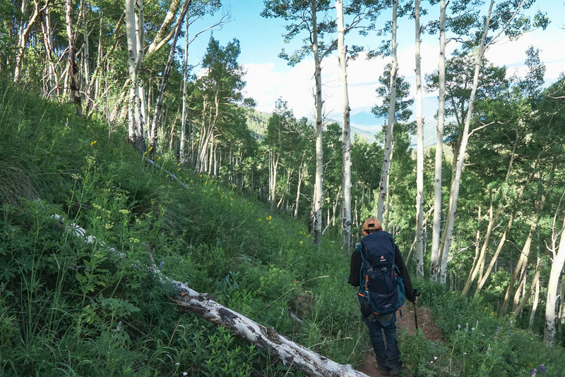 Enjoy the aspen groves that dominate the majority of this hike.