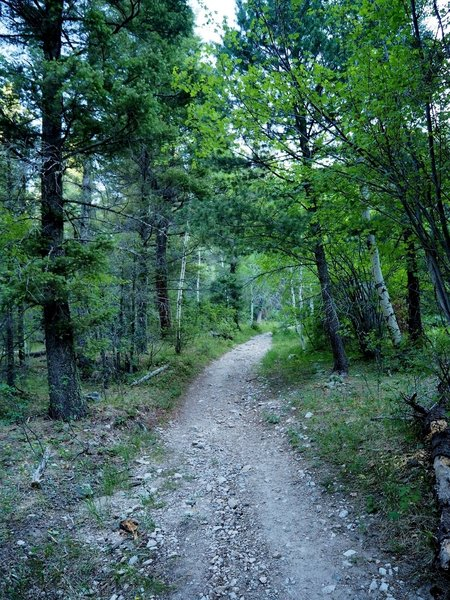 The trail is an old road for about the first 2 miles.