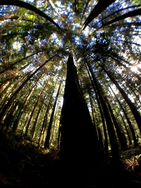The very tall trees that surround the trail are amazing.