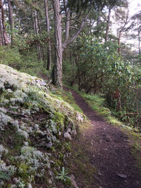 The trail passing by a rock outcropping.