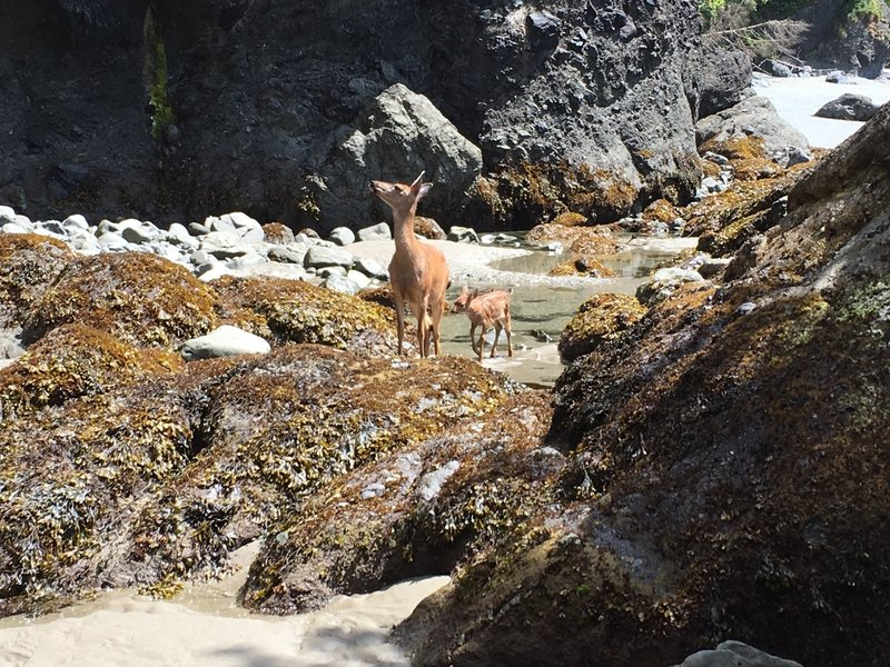 A mama deer and her baby just feet from us.