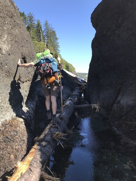 Hiking over a tree, that is suspended over water, between two sea stacks.