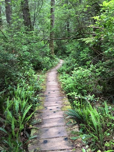 The boardwalk through the forest.