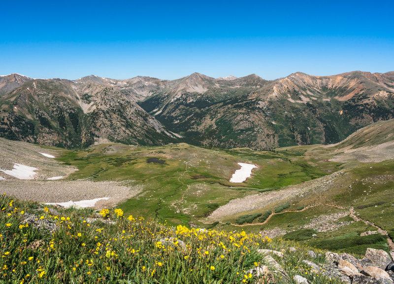 Virginia Peak, Winfield Peak, and Granite Mountain in the distance, looking back at the Huron Peak trail, wildflowers in full bloom.