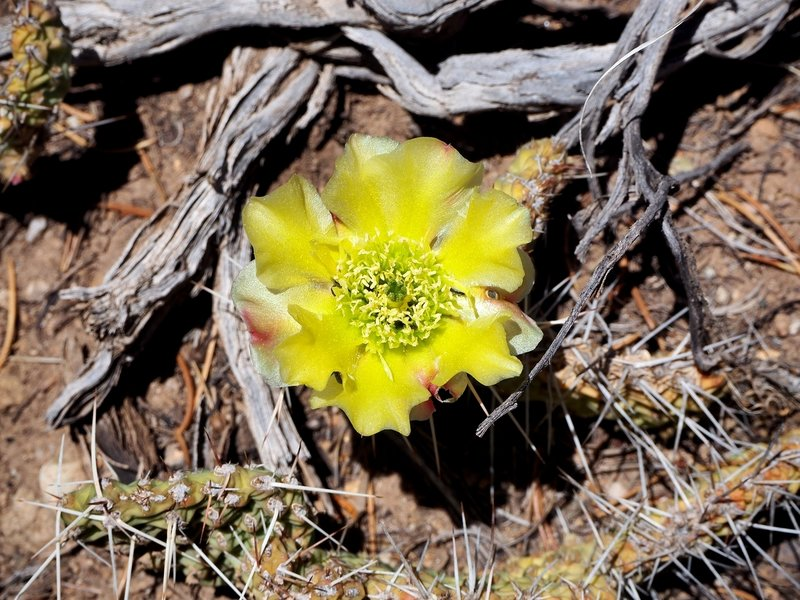 A desert flower along the trail