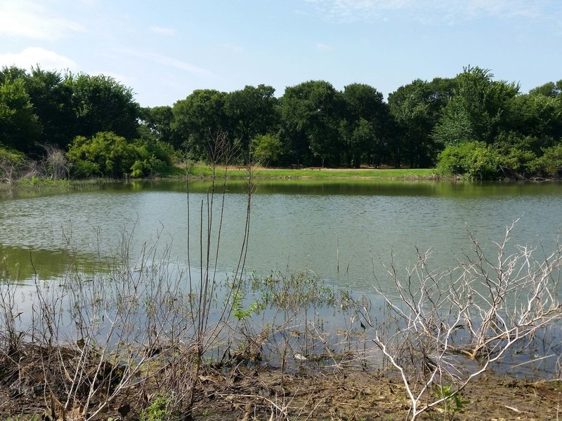 Pond from shared leg of the Thicket & Pond Loops