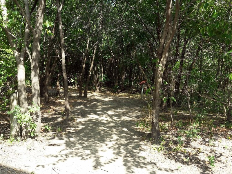 Entering the Thicket Loop Trail