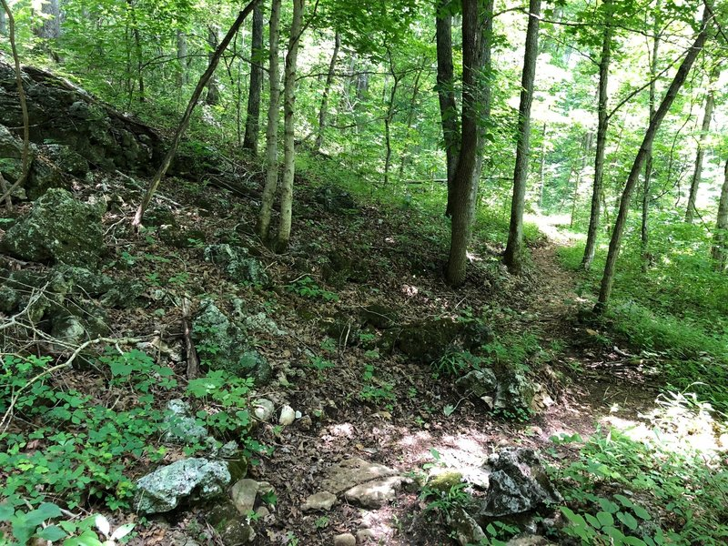 Trail in July