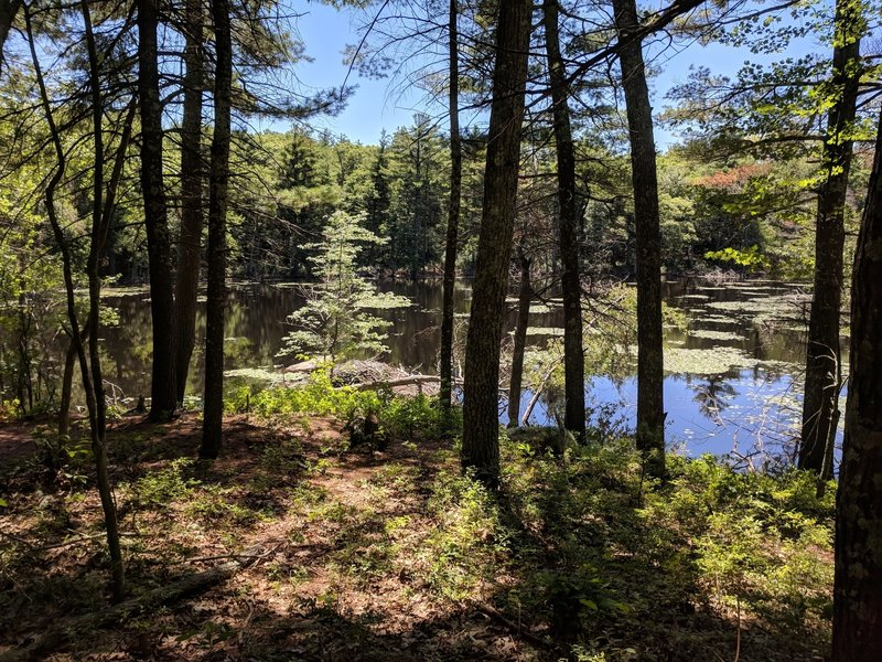 Echo Pond with a beaver dam at the water's edge