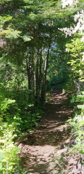 A section of trail near the beginning.