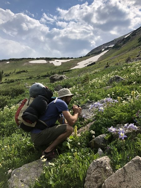 Abundant wildflowers along the entire trail, including lupine, columbine, and glacier lilies.