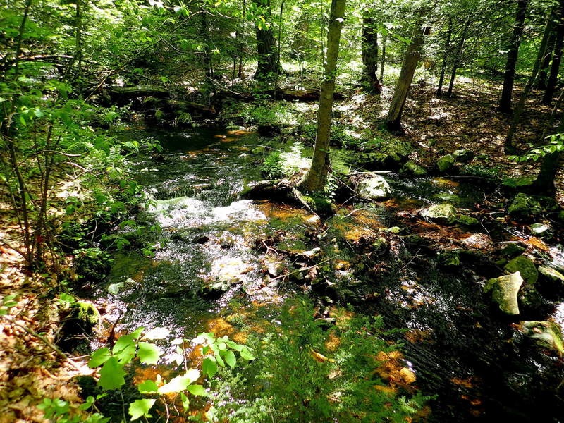 Creek along Stoll trail near Dimon Rd