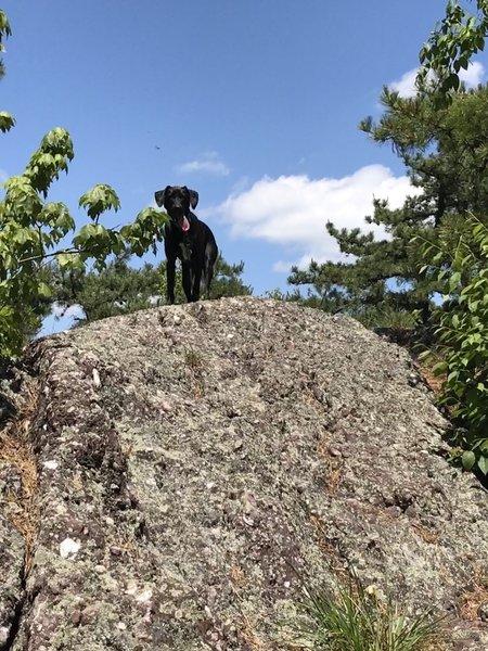 Boulders along the path at Bearfort Ridge