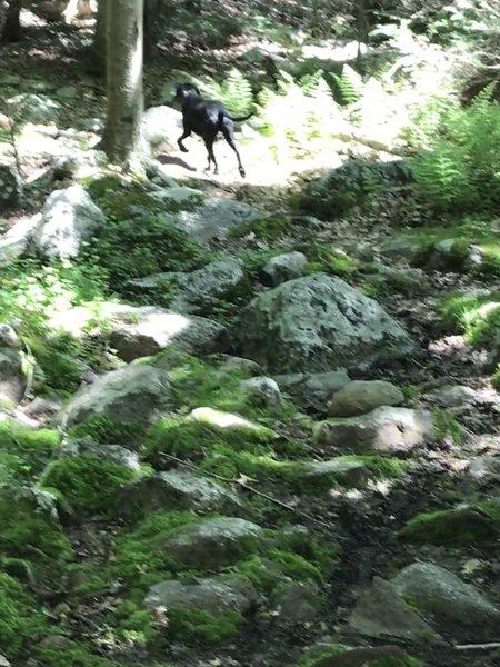 Bearfort Path
