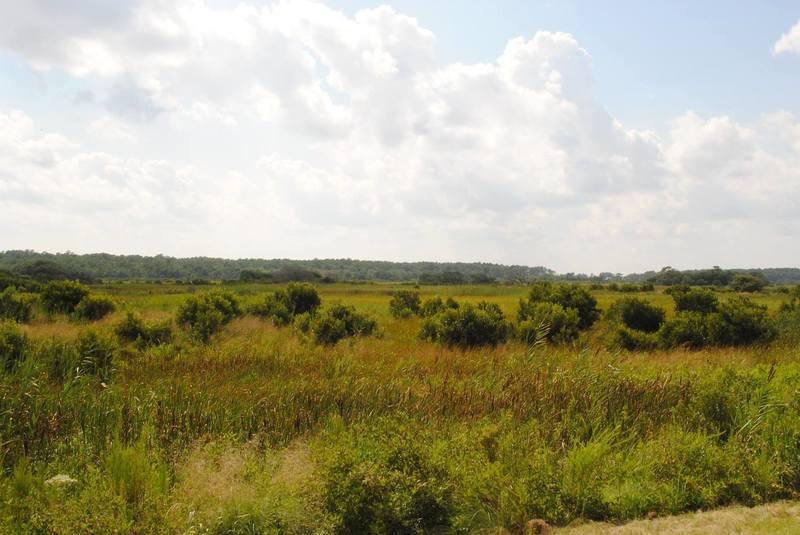 Back Bay's barrier island marshlands
