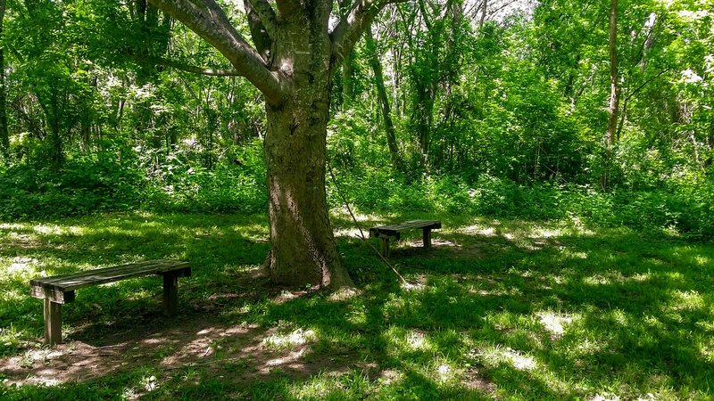 A shady place to rest and enjoy the solitude.