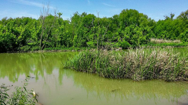 Rowlett Creek as it heads towards the lake.