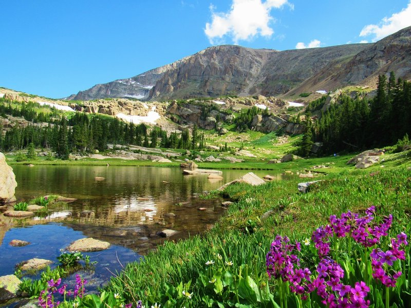 Lion Lake with Summer Wildflowers mid-July