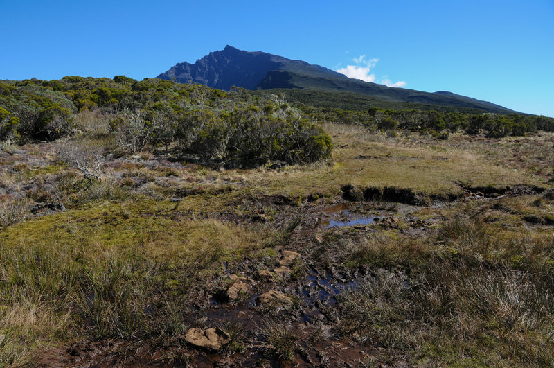 A muddy section of the trail with clear views to Piton des Neiges on a clear day