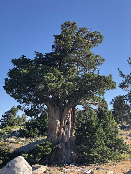 A beautiful old tree at the top of the ridge