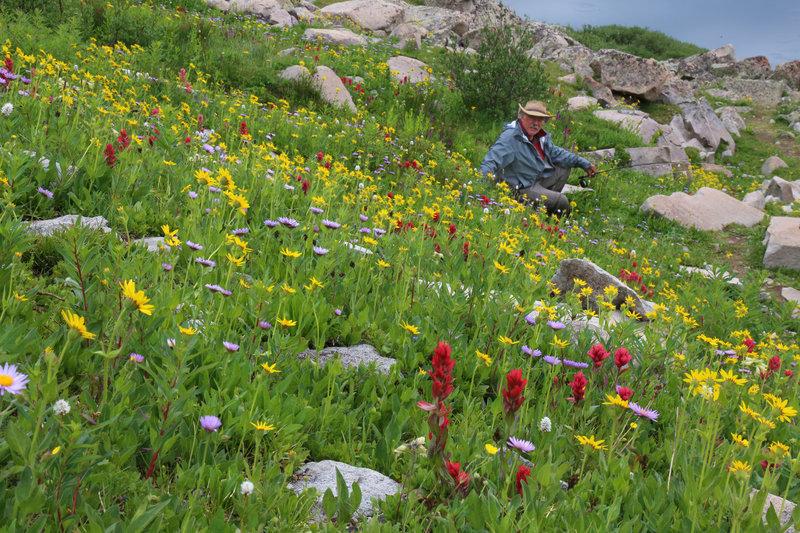 American Lakes has spectacular wildflower displays in mid-July.