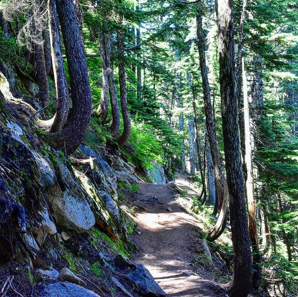 Trail between the overlook and Mason Lake