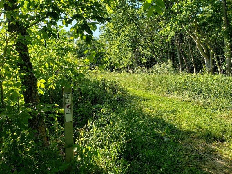 Beaver Trail start