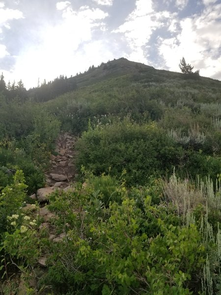 Heading up the ridge on trail.