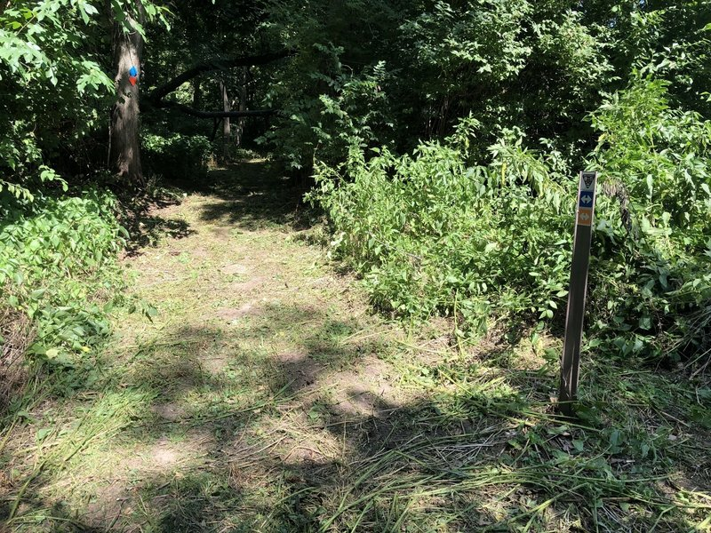 Picture of trail from the trailhead.  Recently mowed.