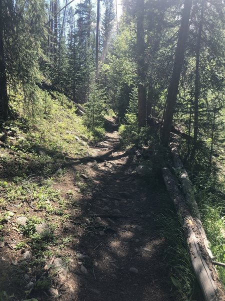 Shady relief on the trail on a high country afternoon