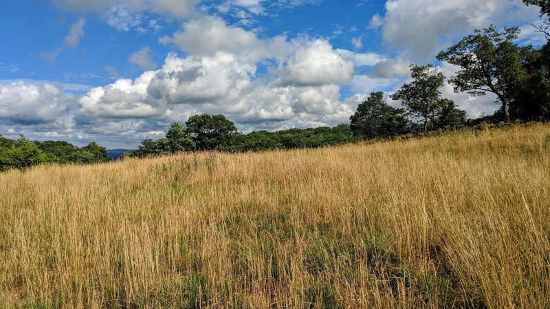 Just off trail sits a serene field in south Harriman State Park