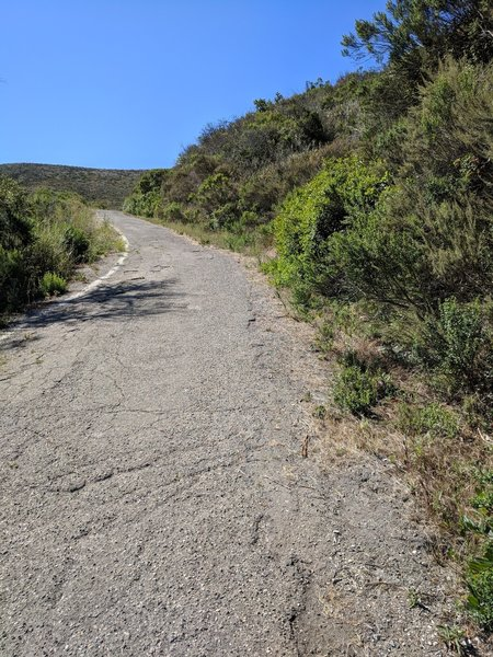 Steep uphill with clear trail