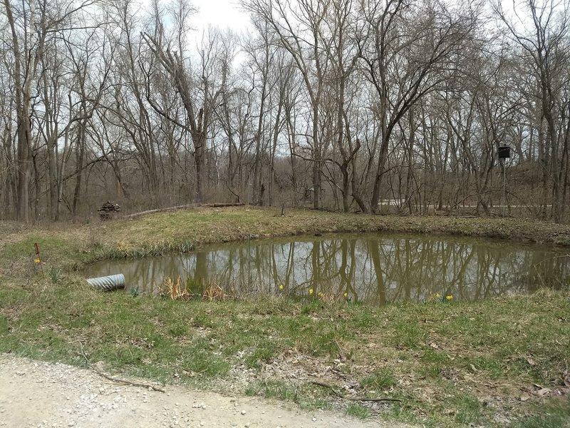 Walt's Pond