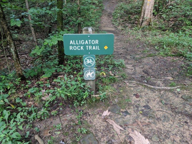 Alligator Rock Trail
