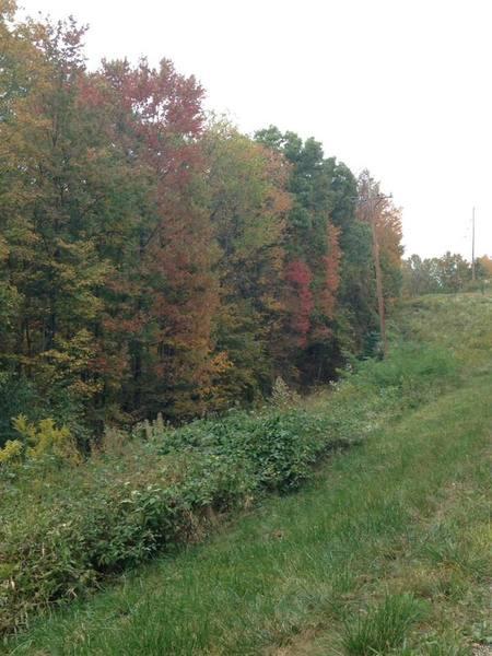 A beautiful fall hike!